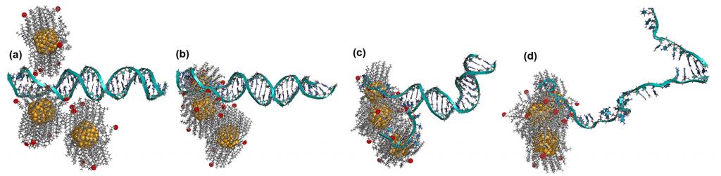 DNA-timeline-Unraveling