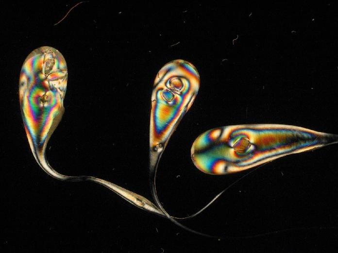 دراسة الإجهادات الداخلية المتبقية ضمن المواد الزجاجية باستخدام المرشحات المقطبة.