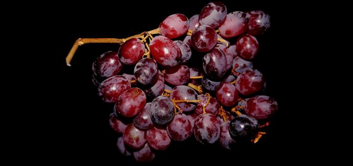 حماية العنب من الآفات عن طريق تنشيط مناعته الطبيعية