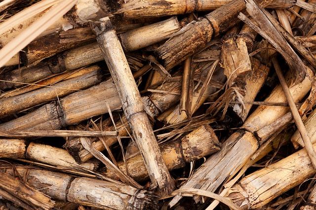 التدفئة بالكتلة الحيوية يمكن أن تصبح صديقة للبيئة بفضل الفطريات