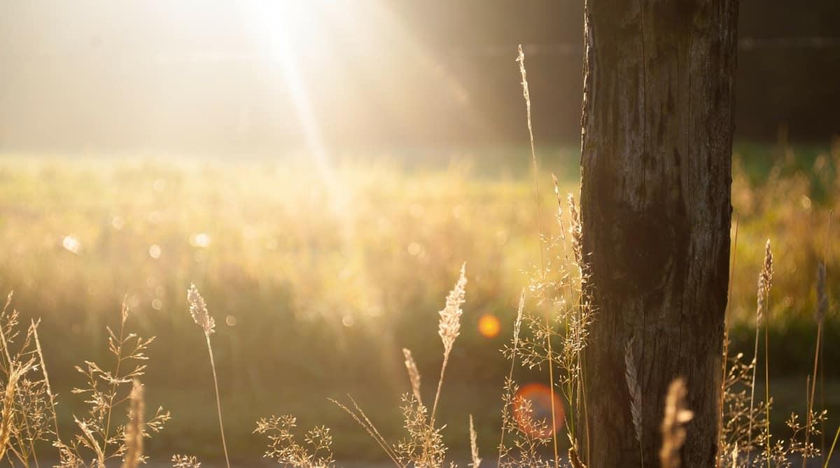 أشعة الشمس هي ما يؤثر على حالتك النفسية