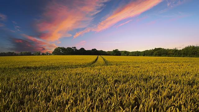 ثورة زراعية باستخدام الأسمدة النانوية